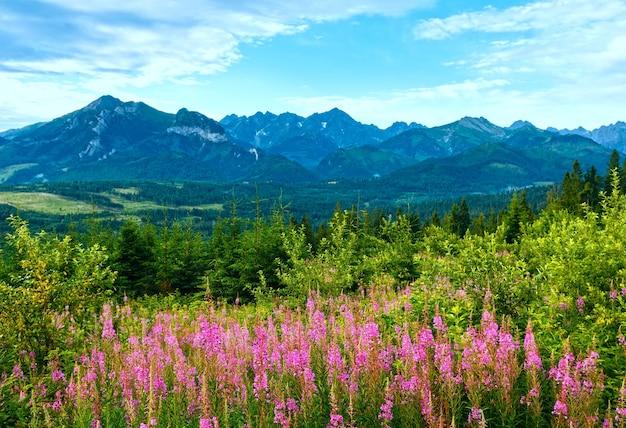 Letni poranek górski krajobraz z różowymi kwiatami przed i pasmem tatr za polską