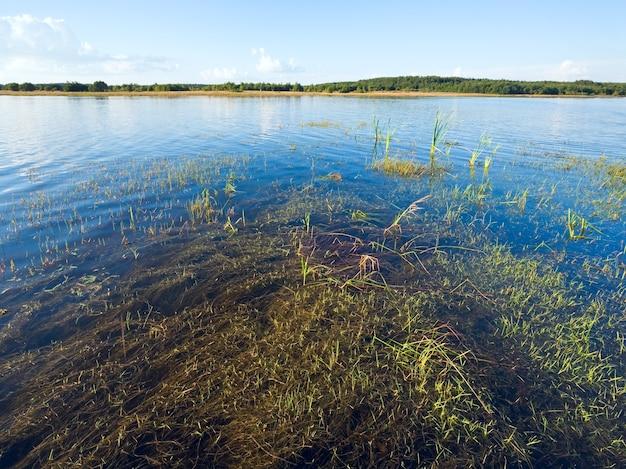 Letni rushy widok na jezioro z niektórymi roślinami na powierzchni wody