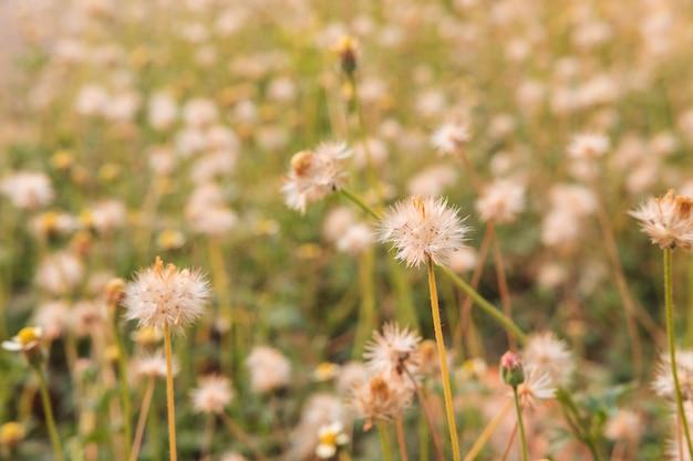 Letni stół kwiatowy
