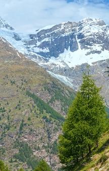 Letni widok na alpy z płaskowyżu z jodłami na zboczu. (szwajcaria, niedaleko zermatt)