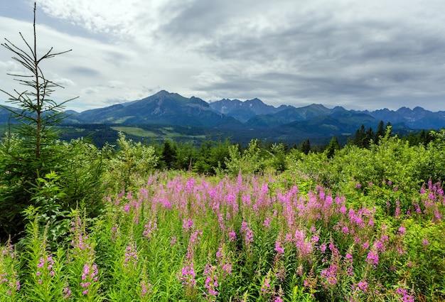 Letni widok na góry z różowymi kwiatami z przodu i pasmem tatr z tyłu (polska)