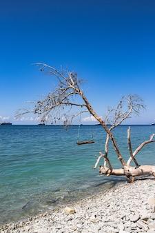 Letni widok na morze, kamienista plaża z huśtawkami na zwalonym drzewie i statki towarowe