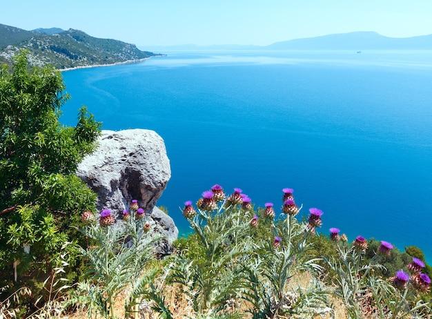 Letni widok na wybrzeże adriatyku z drzewem, rośliną ostu i kamieniem z przodu (chorwacja)