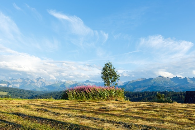 Letni wieczór górski z skoszonym polem i samotnym drzewem oraz pasmem tatr (gliczarów górny, polska)