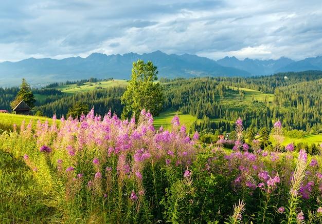 Letni wieczór na obrzeżach górskiej wioski z różowymi kwiatami z przodu i pasmem tatrzańskim z tyłu (gliczarów górny, polska)
