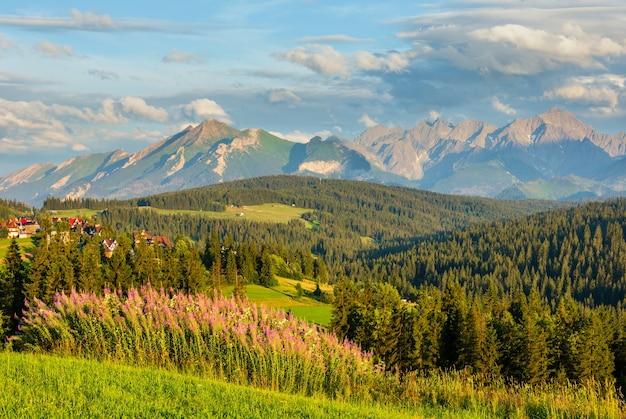 Letni wieczór na skraju górskiej wioski z różowymi kwiatami z przodu i pasmem tatr z tyłu (gliczarów górny, polska)