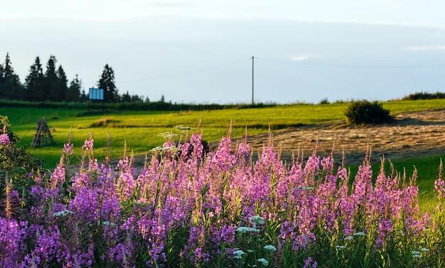 Letni wieczór na skraju górskiej wioski z różowymi kwiatami z przodu