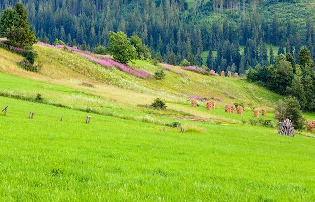 Letni wieczór obrzeża górskiej wioski z różowymi kwiatami i stogami siana na wzgórzu (gliczarów górny, polska)