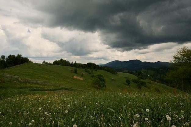 Letni zielony trawnik bez ludzi ani zwierząt.