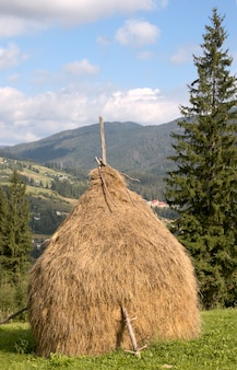 Letnia górska zielona łąka ze stosami siana (karpacki mt-s, ukraina).