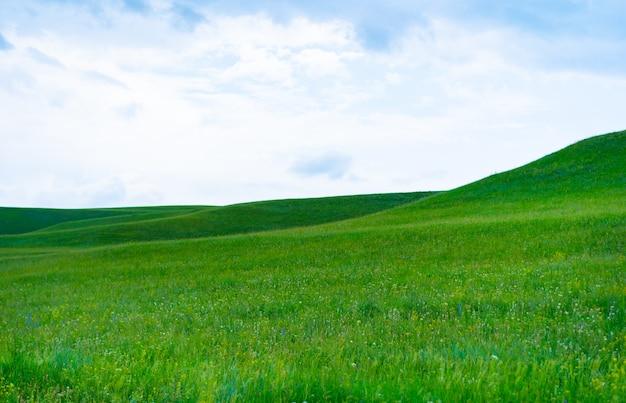 Letnia łąka na tle nieba
