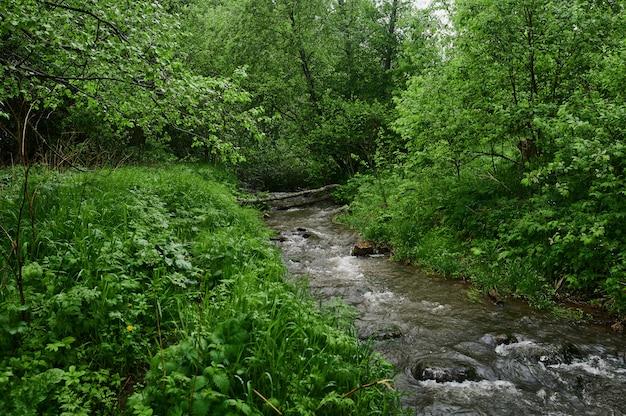 Letnia mgła wzdłuż rzeki williams, pędzący górski potok widziany wzdłuż.