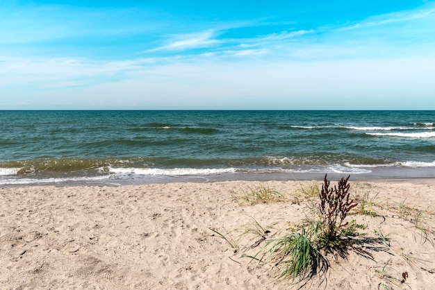Letnia piaszczysta plaża nad morzem bałtyckim