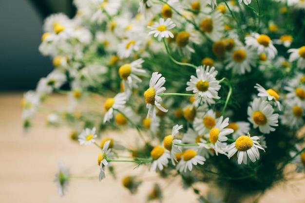 Letnia stokrotka kwitnie na jasnym tle