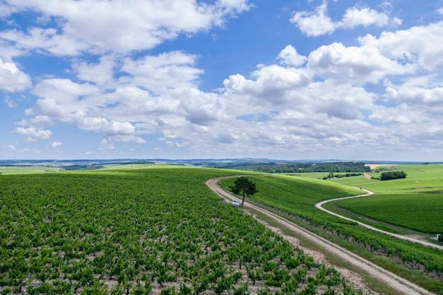 Letnia winnica malowniczy krajobraz