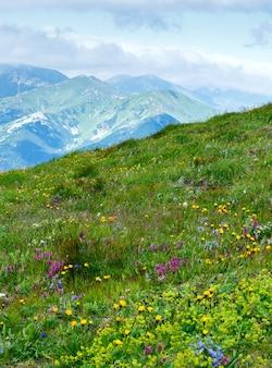 Letnie dzikie kwiaty w tatrach, polska. niektóre rośliny z przodu mają efekt wietrznego ruchu