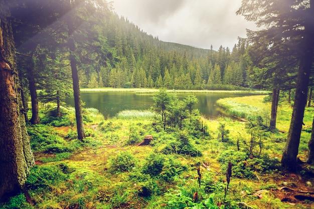 Letnie górskie jezioro forrest