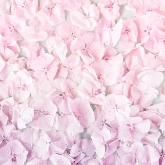 Letnie kwitnące delikatne pastelowe różowe kwiaty