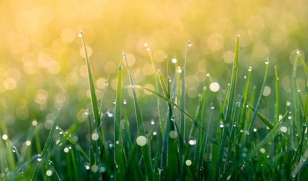 Letnie tło, świeża zielona trawa i krople rosy