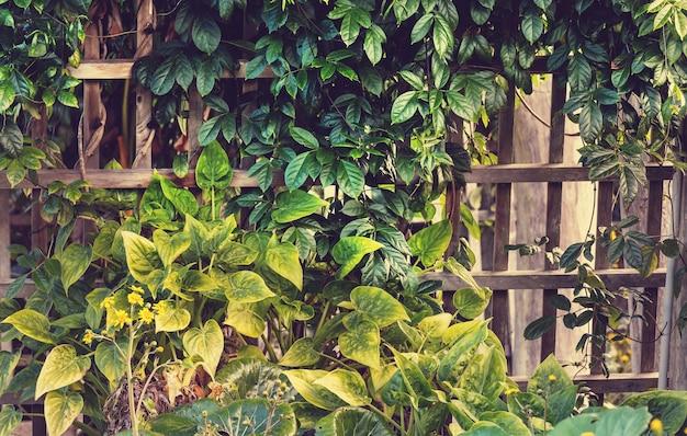 Letnie tło z liśćmi tropikalnych drzew