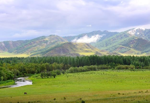 Letnie zielone pola drzew nad brzegiem rzeki pod zachmurzonym niebem syberia rosja