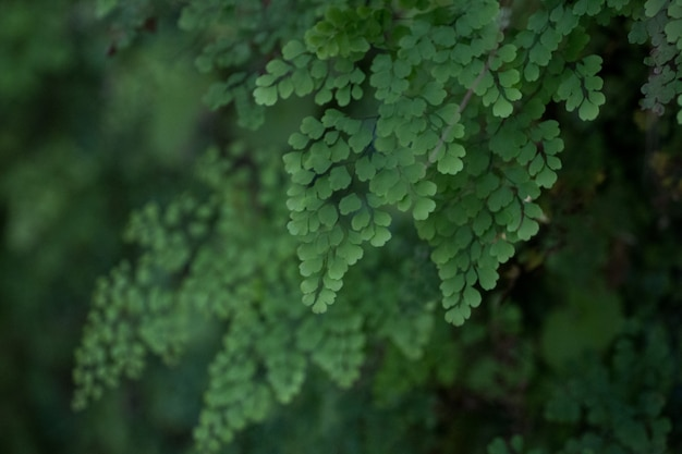 Lewada z caldeirao verde