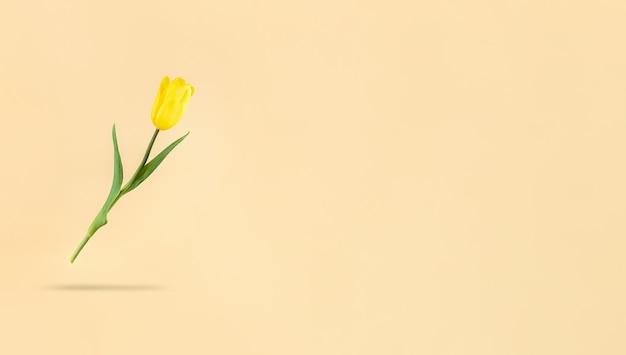 Lewitujący żółty tulipan na beżowym tle i cień pod nim. mimalistyczne zdjęcie wakacyjne z miejsca na kopię.