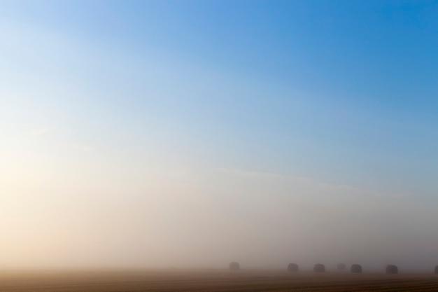 Leżące na ziemi cylindryczne stosy słomy po zbiorach, letni krajobraz o poranku z gęstą mgłą