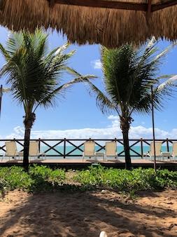 Leżaki nad morzem z palmami kokosowymi obok błękitnego nieba