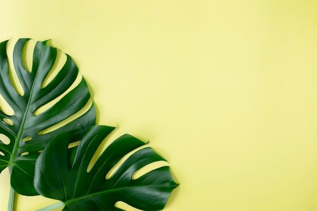 Leżał płasko z dwoma zielonymi liśćmi palmy monstera na jasnozielonym tle. koncepcja sezonu plażowego, koncepcja środowiska ekologicznego. klimat zwrotnikowy, wzrost roślin domowych.