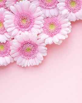 Leżał płasko z różowych kwiatów gerbery