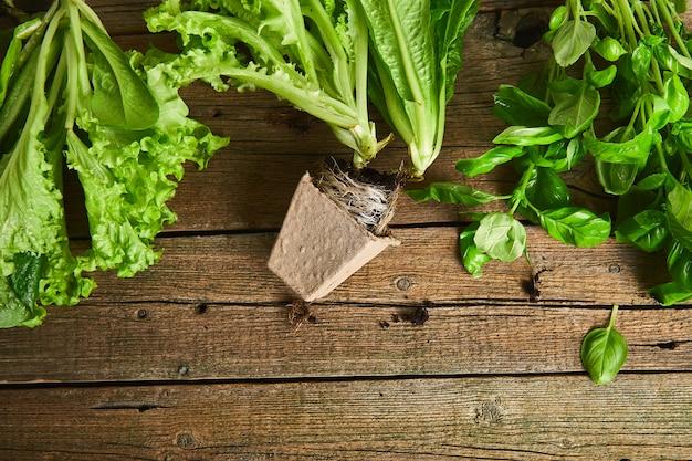 Leżał z płaskim narzędzia ogrodnicze, bazylia, ekologiczne doniczki zieleni, gleby na drewniane tła. układ z wolnym tekstem przechwyconym z góry.