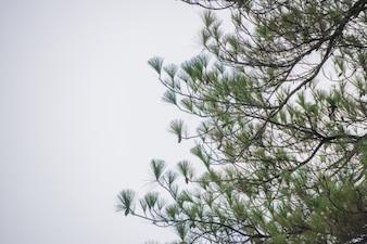 Liście z lasu sosnowego