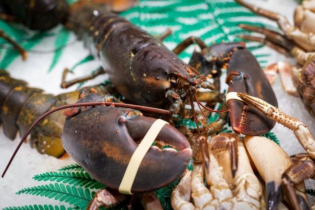 Licytuj świeżego żywego, niegotowanego homara