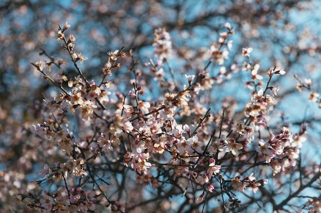 Liczne białe kwiaty na gałęziach