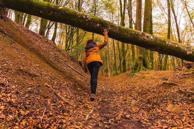 Lifestyle, młoda brunetka w żółtej kurtce spacerująca jesienią pod drzewem w lesie. las artikutza w san sebastin, gipuzkoa, kraj basków. hiszpania