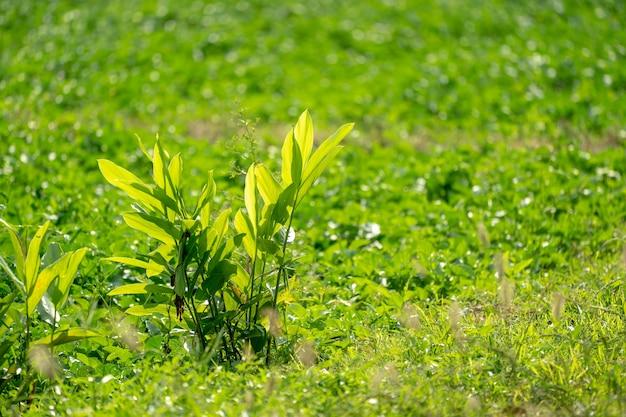 Liitle drzewa jarzą się w porannym słońcu na polu trawy.