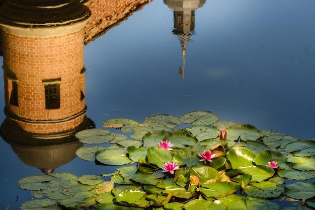 Lilia wodna w stawie ogrodowym z odbiciem wieży zamku w nieświeżu.