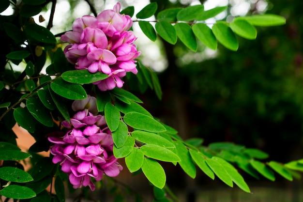Liliowa gałąź kwiatów. kwitnące drzewo