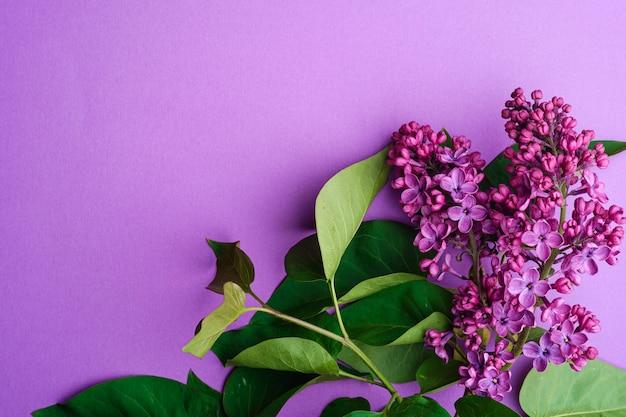 Lily bukiet kwitnie z liśćmi na minimalnym fiołkowym tle, odgórnego widoku kopii przestrzeń