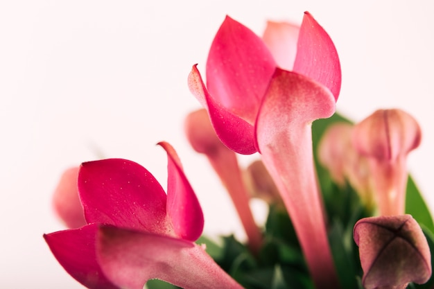 Lily kwiat bukiet na białym tle