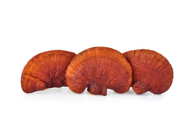 Lingzhi mushroom ganoderma lucidum na białym tle na białej powierzchni