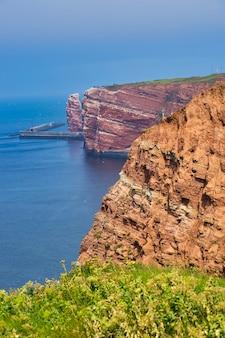 Linia brzegowa helgolandu - błękitne niebo i błękitne morze północne - zielony kwiat z przodu