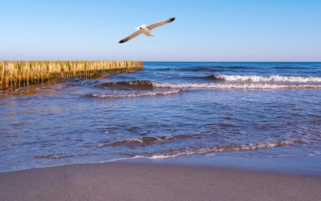 Linia brzegowa morza bałtyckiego. morze bałtyckie w wietrzny dzień.