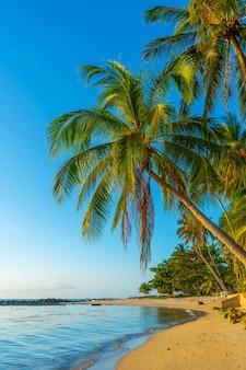 Linia brzegowa z piaszczystą plażą i palmami na tropikalnej wyspie