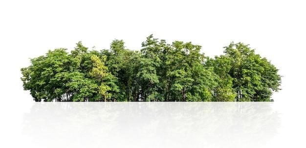 Linia drzewa na białym tle