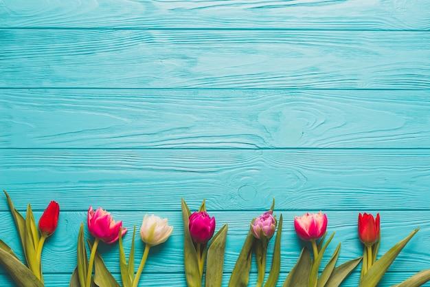 Linia z jasnych tulipanów