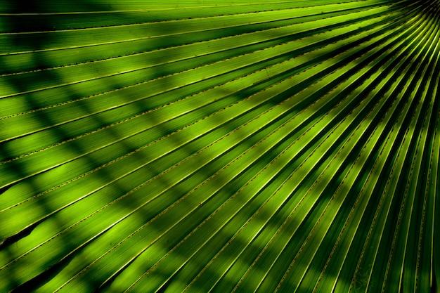Linie i tekstury zielonych liści palmowych z cieniem
