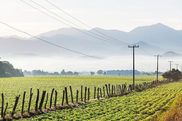Linie napięciowe i zielony krajobraz rolniczy w słoneczny dzień