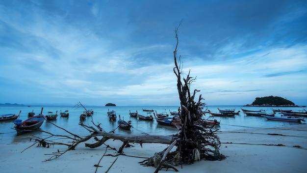 Lipe morze i martwe drzewa